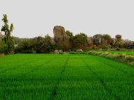 Rice paddy, weird rocks, Hampi